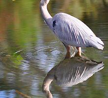 Blue Heron by TonyaAnjean