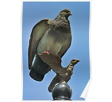 Hey! Would'da Mean I'm Not An Eagle! Do I Look Like A Pigeon To You? Poster