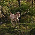 Highland Foal by Kat Simmons
