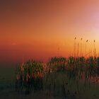 sunrise on lake by Mustafa UZEL