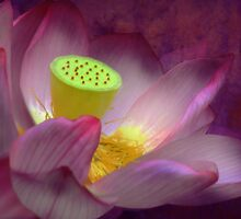 The Sacred Flower - The Lotus by Mark Richards