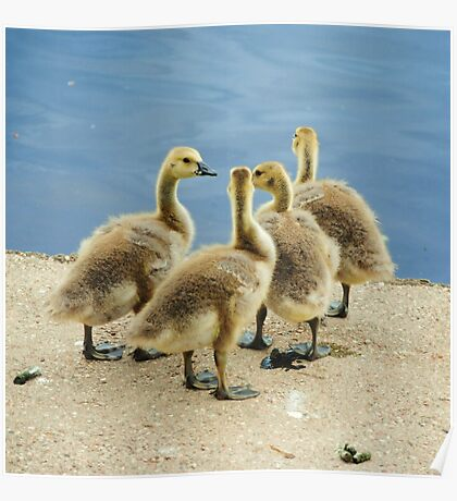 Four Goslings Poster
