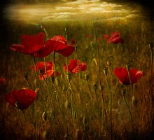 Fields of Red by Barbara Simmons