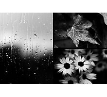 AFTER THE RAIN (TRIPTYCH) Photographic Print