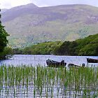 Killarney Boats by Paul Finnegan