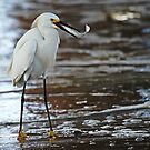 Egret Lunch by KatsEyePhoto