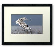 Snowy Owl Framed Print