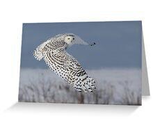 Snowy Owl Greeting Card