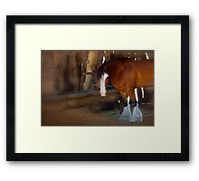 Bad Hair Day - Draught Horse Framed Print