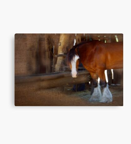Bad Hair Day - Draught Horse Canvas Print