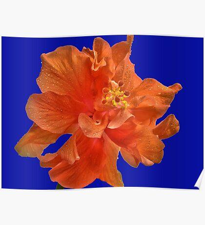 Orange Hibiscus #2 Poster