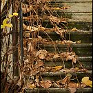 Autumnal Stairs by kilmann
