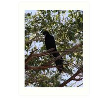 Intrigued Grackle Art Print