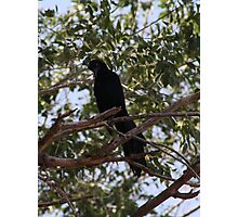 Intrigued Grackle Photographic Print