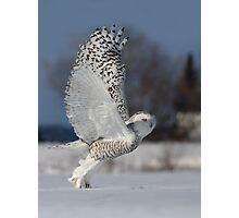 Snowy Owl II Photographic Print