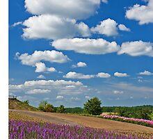 Landscape by jasonksleung