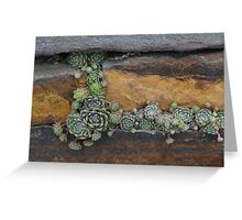 Plants Growing in a Stone Wall Greeting Card