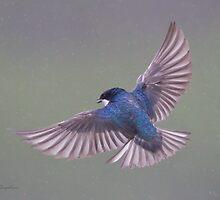 Tree Swallow in the rain by PixlPixi