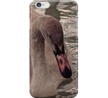 Trumpeter swan cygnet iPhone Case/Skin