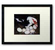 Tending the Eggs Framed Print