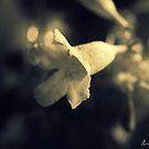 Untitled by Lorena María