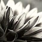 The sun still shines in black & white by Celeste Mookherjee