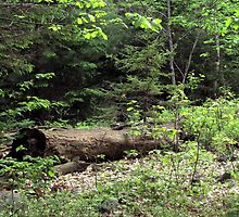 """A """"sitting log"""" in the forest by Patty Gross"""
