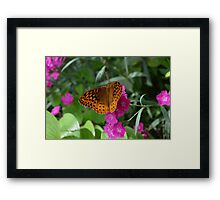 Orange Fritillary Butterfly on Dianthus  Framed Print