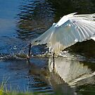Egret Goes Frogging by Caren