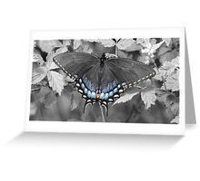 Female Swallowtail in selective color. Greeting Card