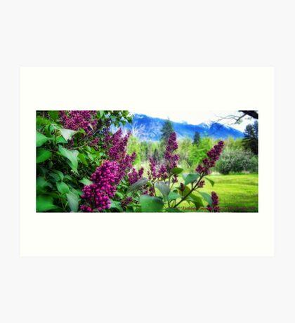 Lilac Dreams Art Print