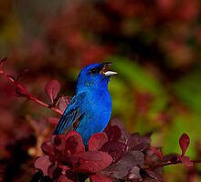 Singing The Blues by John Absher