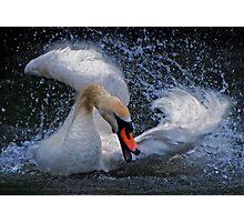 Raging Swan Photographic Print