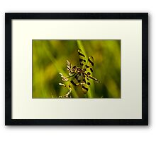 Brown Spotted Yellow-wing Dragonfly Framed Print