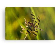 Brown Spotted Yellow-wing Dragonfly Metal Print