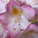 Pink and Pretty by Indrani Ghose