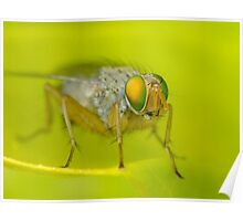 Fly Macro Poster