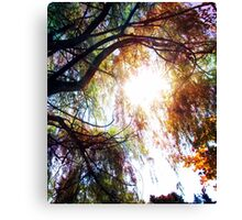Wipping Willow Canvas Print