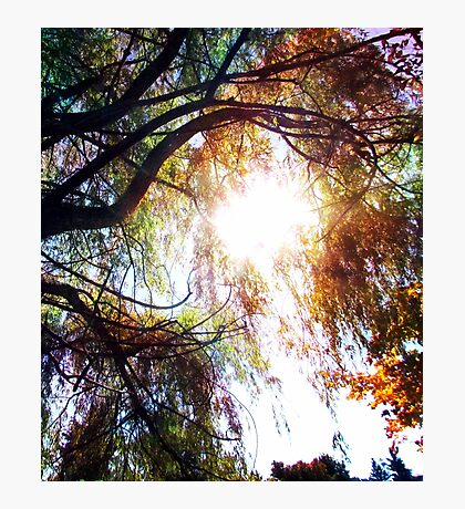 Wipping Willow Photographic Print