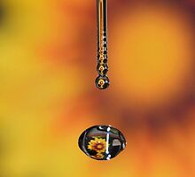 Water Drop Reflection... by William Brennan
