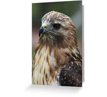 "Red-Tailed Hawk - ""Amanda"" Greeting Card"