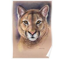 "Mountain Lion ""Raja"" Wild At Heart Series by Maureen Shelleau Poster"