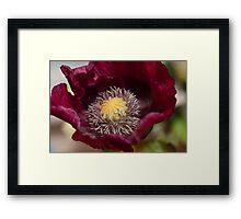 Wine Poppy Framed Print
