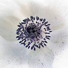 Powder Blue by Melanie Simmonds