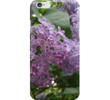 Lilac Blooms iPhone Case/Skin