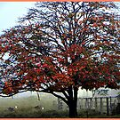"""Gympie's Fall """"The best we can Do"""" by Burnie"""