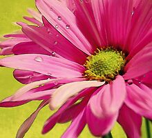 All Things Bright & Beautiful - Daisy by Sherie LaPrade