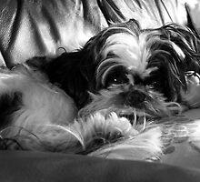 Pet Cuddling Into A Doll by AmandaJanePhoto