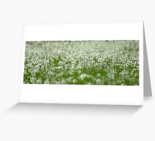 Field of Seeds....................signs of a hot summer!! Greeting Card