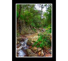 On the way to Simpson's Falls Photographic Print